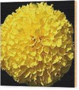 Yellow Marigold Wood Print