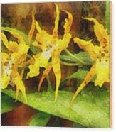 Yellow Miltassia Orchids Wood Print