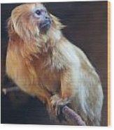 Yellow Monkey Wood Print