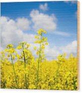 Yellow Mustard Field Wood Print