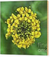 Yellow On Green Wood Print