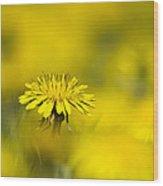 Yellow On Yellow Dandelion Wood Print
