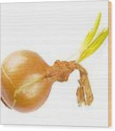 Yellow Onion With Sprout Wood Print