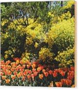 Yellow Orange - Springtime Wood Print