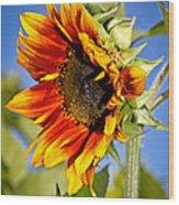 Yellow Orange Sunflower Wood Print