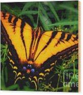Yellow Orange Tiger Swallowtail Butterfly Wood Print