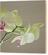 Yellow Orchids Wood Print by Ben Spencer