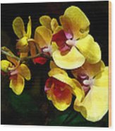 Yellow Orchids Shadow And Light Wood Print