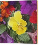 Yellow Pansy  Wood Print by Donald Torgerson