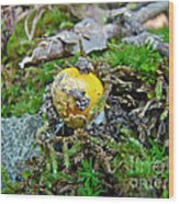 Yellow Patches Baby Mushroom - Amanita Muscaria Wood Print