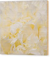 Yellow Peony Petals Wood Print