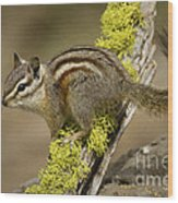 Yellow Pine Chipmunk Wood Print