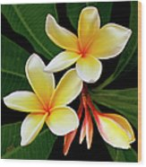 Yellow Plumeria Wood Print by Ben and Raisa Gertsberg