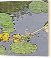 Yellow Pond Lilies On Lake Yellowhead Along Yellowhead Highway-b Wood Print