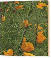 Yellow Poppies Dsc07460 Wood Print