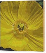 Yellow Poppy Flower Wood Print