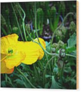 Yellow Poppy Xl Format Floral Photography Wood Print