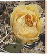 Yellow Prickly Pear Wood Print