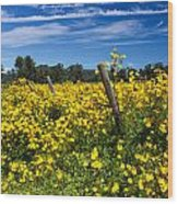 Yellow Profusion Wood Print