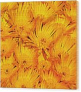Yellow Radiance  Wood Print