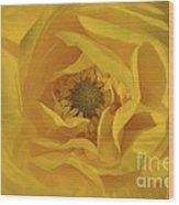 Yellow Ranunculus Wood Print