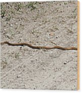 Yellow Rat Snake Wood Print