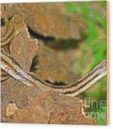 Yellow Rat Snakes Wood Print