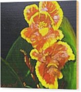 Yellow-red Canna Lily Wood Print