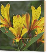 Yellow Red Flower Wood Print