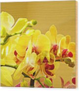 Yellow Red Orchid Flowers Art Prints Orchids Wood Print