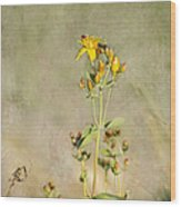 Yellow-red Wildflower With Texture Wood Print