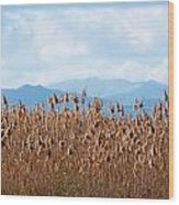 Yellow Reeds And Blue Mountains Wood Print
