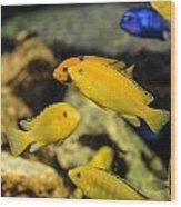 Yellow Reef Fish Wood Print