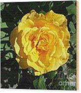 Yellow Rose #1 Wood Print