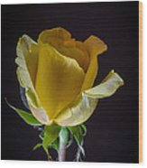 Yellow Rose 1 Wood Print