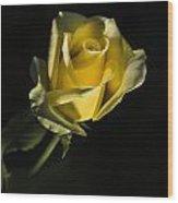 Yellow Rose 11 Wood Print