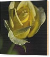 Yellow Rose 12 Wood Print
