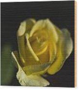 Yellow Rose 13 Wood Print