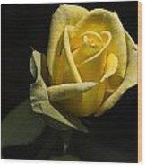 Yellow Rose 14 Wood Print
