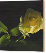 Yellow Rose 15 Wood Print
