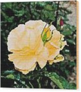 Yellow Rose And Bud Wood Print