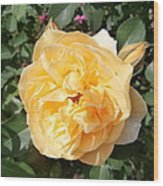 Yellow Rose And Two Rosebuds Wood Print