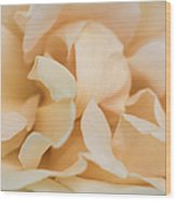 Yellow Rose - Featured 3 Wood Print