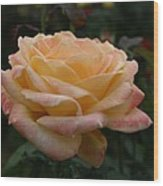 Yellow Rose Kissed By Pink Fairy Wood Print