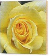Yellow Rose L Wood Print