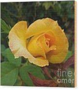 Yellow Rose Of Texas Wood Print