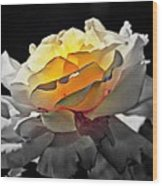 Yellow Rose Series - ...but Soul Is Alive Wood Print