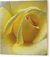 Yellow Rose Softness Wood Print