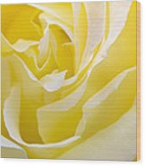 Yellow Rose Wood Print