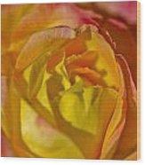 Yellow Rose Up Close Wood Print